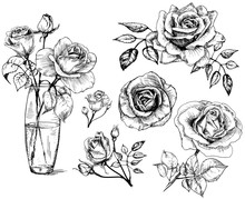 Set Roses, Collection Hand Dra...