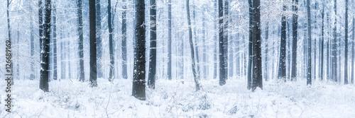 pnie-drzew-i-podloze-calkowicie-pokryte-sniegiem