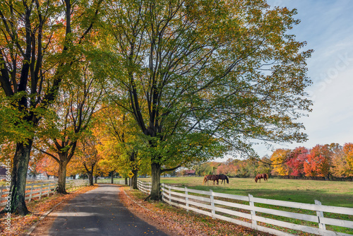 Fotografie, Obraz  Country Road in rural Maryland during Autumn