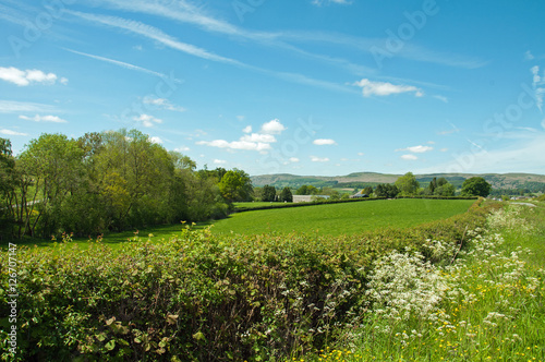 Fototapeta Countryside hedge in the Summertime.