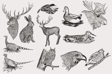 Set Of Detailed Hand Drawn Ani...