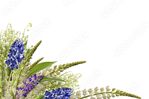Foto op Canvas Lavendel lupines beautiful flowers on a white background