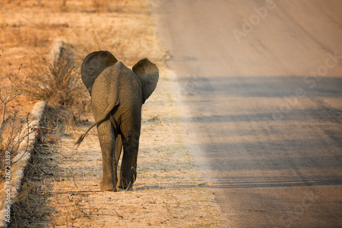 Baby elephant rear view Wallpaper Mural