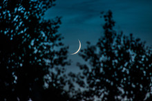 New Moon Behind The Trees