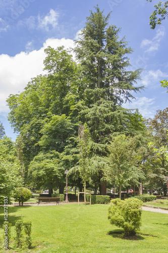 Spoed Fotobehang Begraafplaats Trees and grass on the urban park