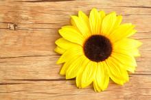 An Artificial Sunflower