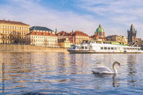 Swan on the Vltava river in Prague - Swan on the Vltava river in Prague Canvas Print