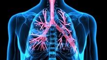 3Dillustration Human Respira...