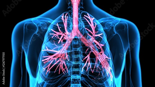 3Dillustration Human Respiratory System Canvas Print