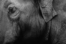 Elephant Skin Texture Monochrome Background. Closeup Shot