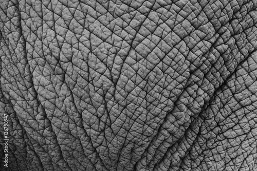 Photo sur Toile Les Textures Elephant skin texture monochrome background. Closeup shot