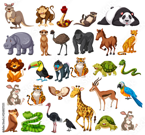 Different types of wild animals on white - Buy this stock ...