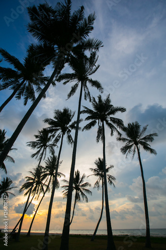 Garden Poster Retro palm trees at beautiful sunset time