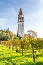 Tower And Vinyard On Island Mazzorbo, Venice, Italy