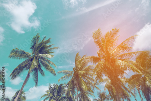 Spoed Foto op Canvas Palm boom Coconut tree at tropical coast with vintage tone and flare filtered