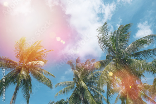 Coconut tree at tropical coast with vintage tone and flare filtered