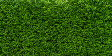 Tree Wall Green Colour  Background