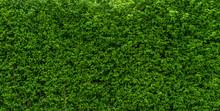 Tree Wall Green Colour  Backgr...