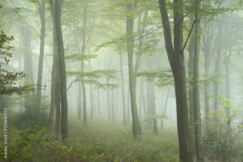 Deurstickers Olijf Lush green fairytale growth concept foggy forest landscape image