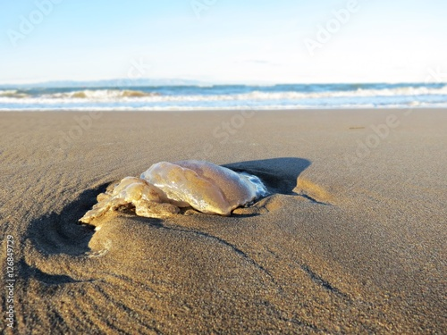 Photo  Medusa sobre la arena de la playa / Jellyfish on the sand of the beach