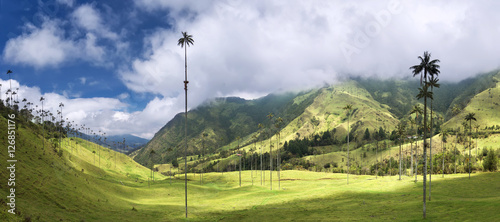 Palm trees in Cocora Valley, Salento, Colombia