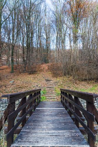 scena-z-drewnianymi-schodami-w-lesie-jesienia
