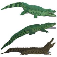 Set Of Crocodiles
