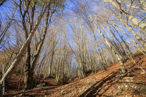 Passo di Forca d'acero in autunno, un bosco tra Lazio e Abruzzo. Alberi, rocce e mille colori della natura  © Claudio Quacquarelli