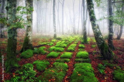 sedimentary rocks in foggy forest