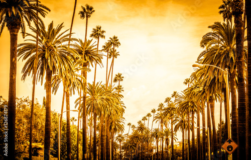 Aluminium Prints Los Angeles Palm trees in Los angeles