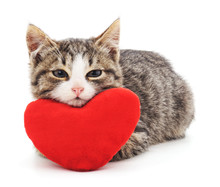 Gray Kitten And Red Heart.