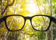 Leinwandbild Motiv Glasses with forest and beautiful bright sunlight