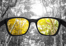 Glasses With Forest, Selected ...