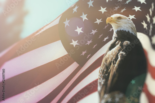 Photo American Bald Eagle Flag Patriotism