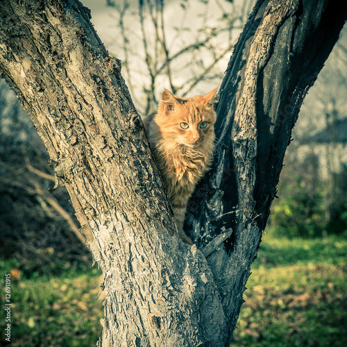 Photo  Red domestic tomcat on the tree