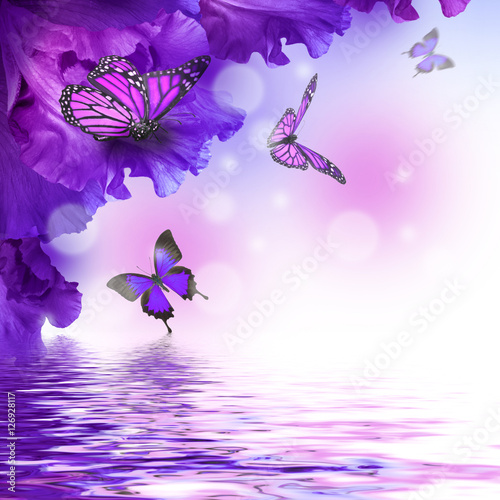 Poster Vlinder Amazing butterfly fairy of flowers, hydrangeas and iris.