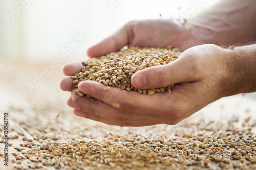 Foto male farmers hands holding malt or cereal grains