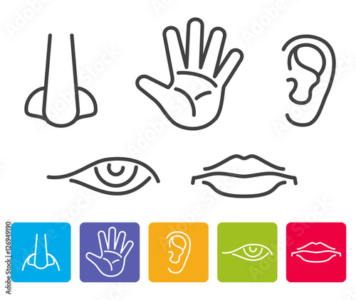 Foto  Five human senses smell, sight, hearing, taste, touch vector icons
