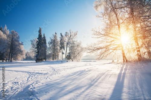 Foto-Doppelrollo - Winter park in snow (von Alexander Ozerov)