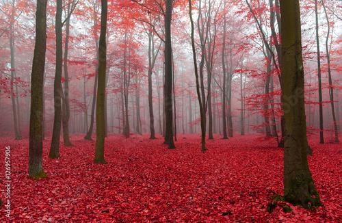Photo  Autumn forest
