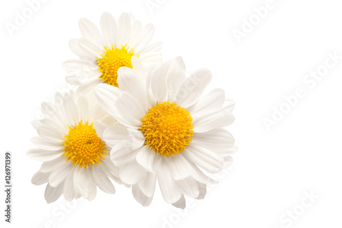 Fotobehang Madeliefjes Three white flowers against white background