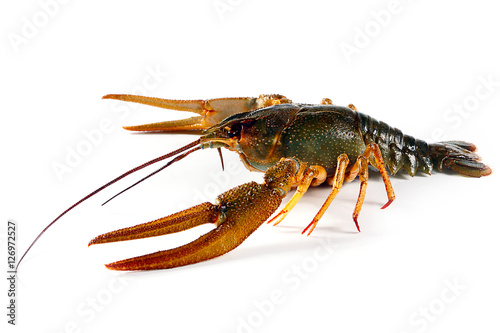 large living crayfish as a trophy sport fishing for food