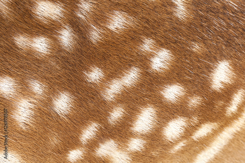 Deer fur closeup view Wallpaper Mural