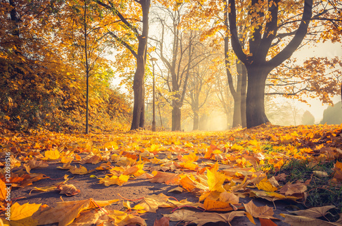 Foto op Plexiglas Diepbruine Fallen leaves, autumn colorful park alley in Krakow, Poland