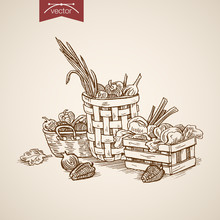 Engraving Hand Vector Crate And Baskets Full Of Vegetables