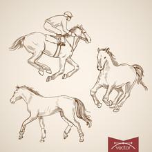 Engraving Hand Vector Horsebac...