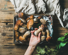 Fresh Picked Porcini Mushrooms In Wooden Tray Over Rustic Background And Woman's Hand Holding One Penny Ben, Top View