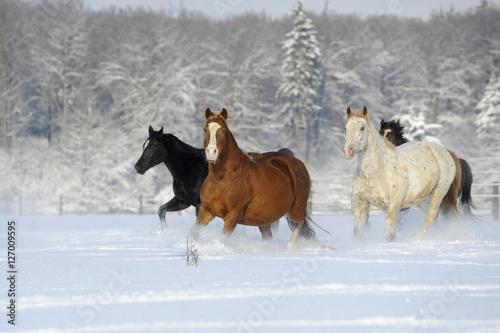 Obrazy na płótnie Canvas Bunte Herde
