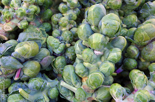 Photo Stands Brussels Fresh picked brussel sprouts on stalks