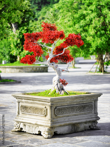 Scenic red Bonsai tree growing in pot outdoors